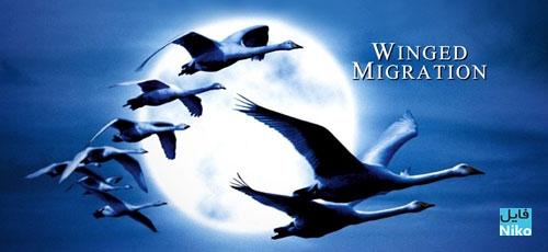 دانلود مستند سفر بر بال پرندگان Winged Migration 2001 با زیرنویس فارسی